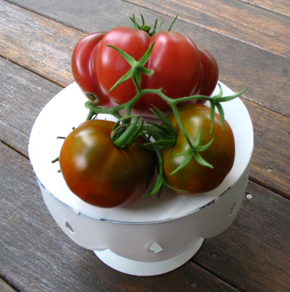 Heirloom Tomatoes at 1840 Farm