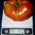 German Johnson Heirloom Tomato at 1840 Farm