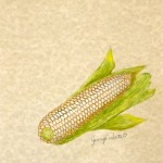 Stowell's Evergreen Heirloom Sweet Corn