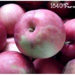Apples at 1840 Farm