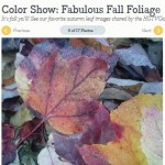Fall Foliage on HGTVGardens