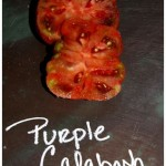 Purple Calabash Heirloom Tomato at 1840 Farm