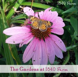 Photo_Gardens