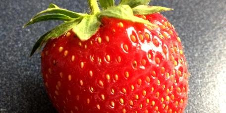 Ripe Strawberry at 1840 Farm