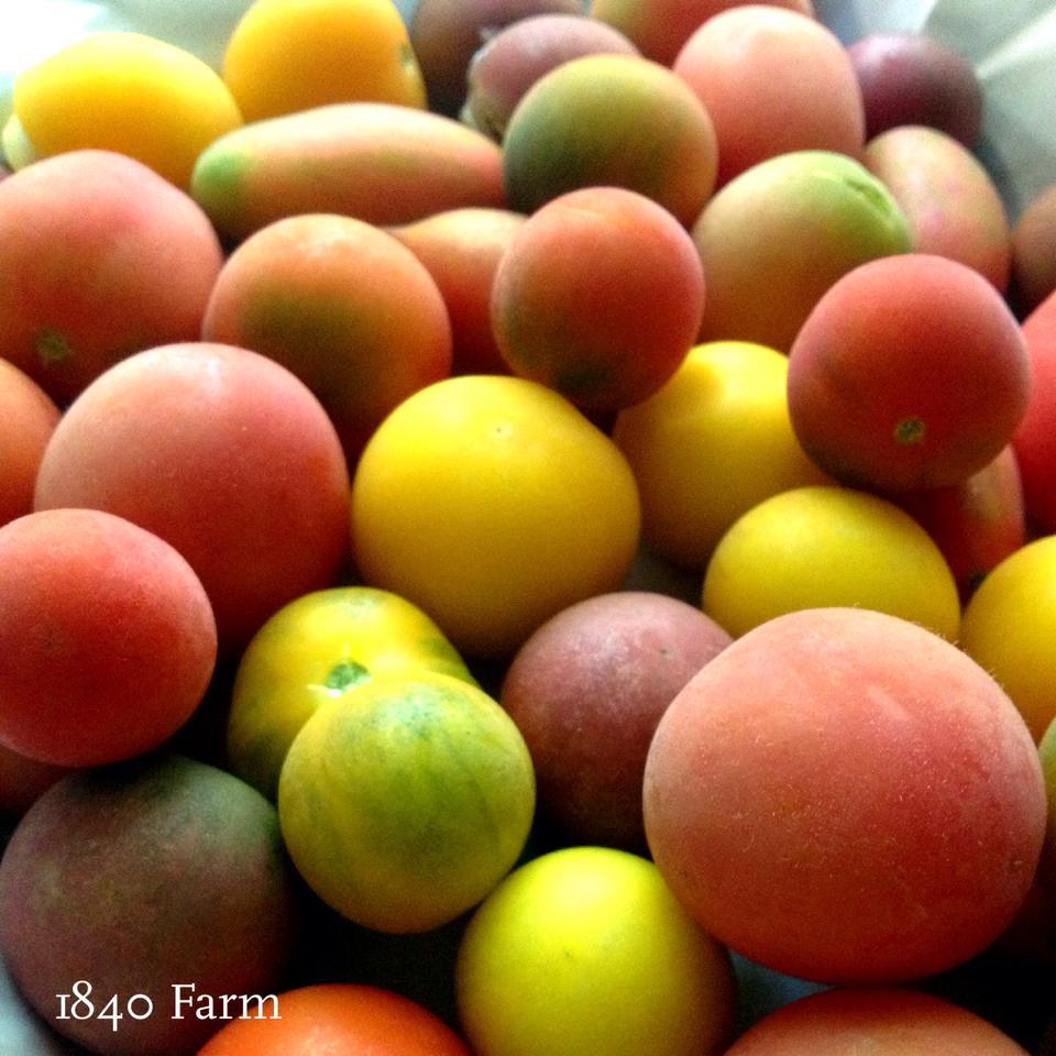 Freezing Tomatoes at 1840 Farm