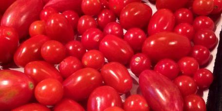Freezing Cherry Tomatoes at 1840 Farm