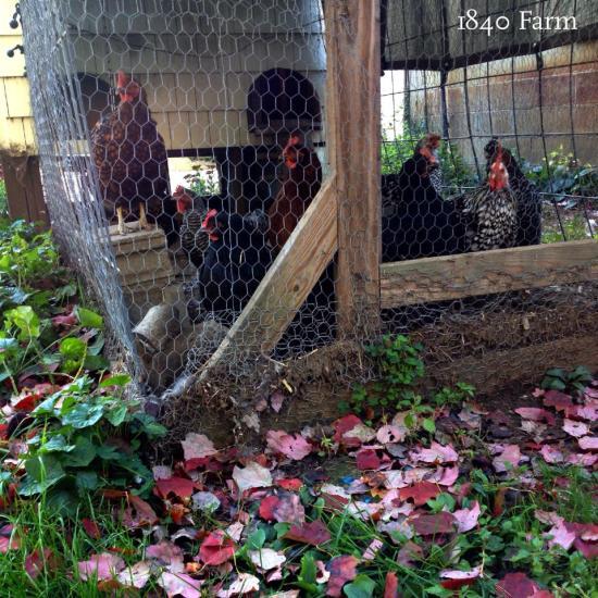 1840 Farm Coop